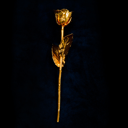 Gold Rose Large Image