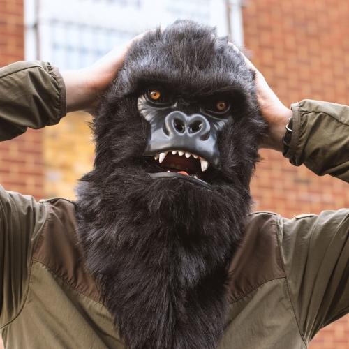 Mr Gorilla Large Image