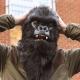 Mr Gorilla thumbnail image 1