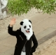 Panda Mask thumbnail image 2