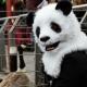 Panda Mask thumbnail image 0