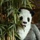 Panda Mask thumbnail image 7