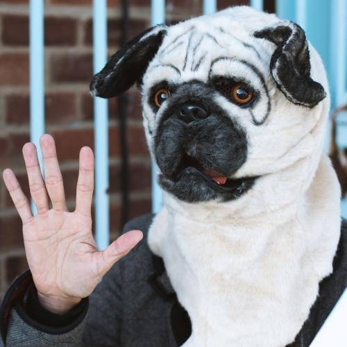 Mr Pug Large Image