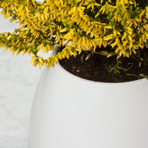Plant Pot Speaker Large Image