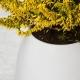 Plant Pot Speaker thumbnail image 2