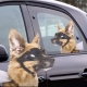 Ride With a Dog thumbnail image 0