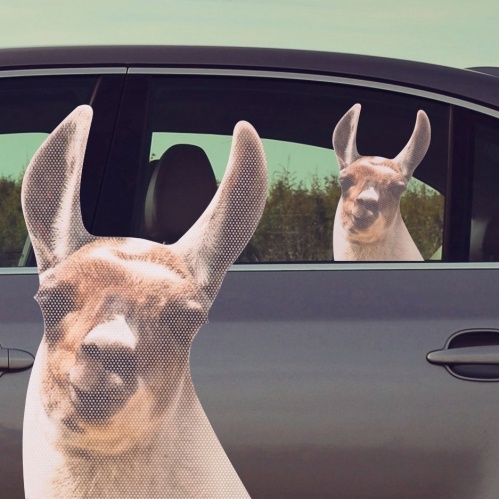 Ride With Llama - Fenstersticker