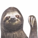 Ride With a Sloth - Fenstersticker Faultier thumbnail image 2