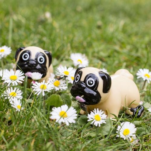 Wind Up Pugs